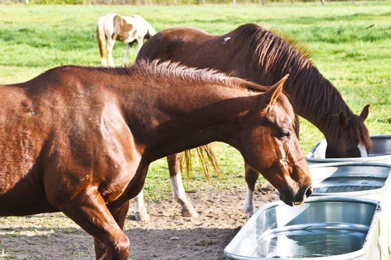 9 Essential Summer Care Tips for Your Horse