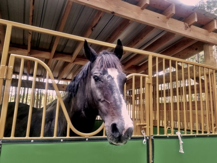 How to Prepare Your Barn (and horse) for Winter