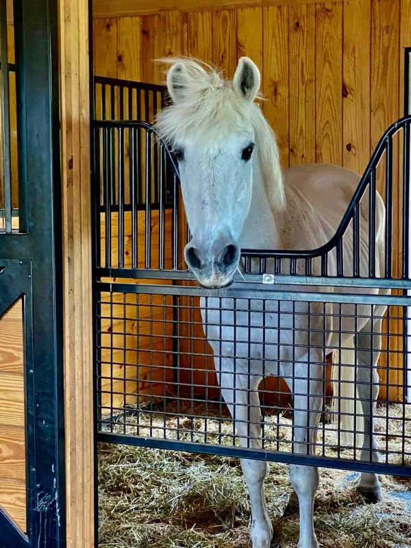 safety barn for horses